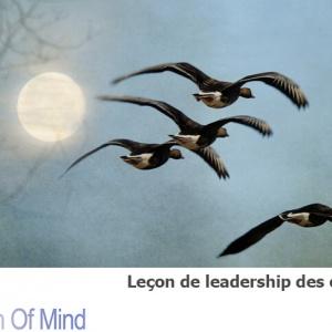 Leçons de vie : Les oies sauvages, pour un meilleur leadership